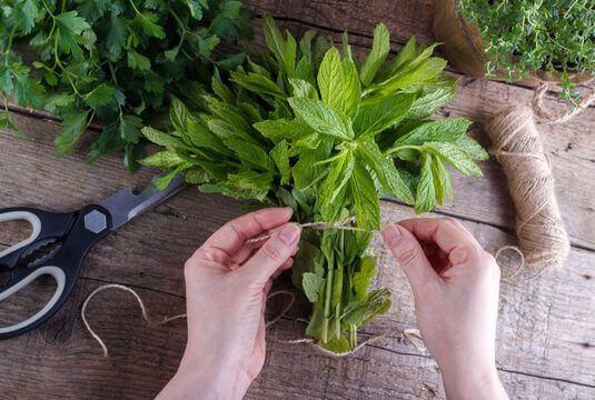 Disposer d'herbes fraîches