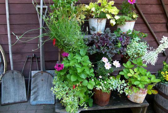 Accumuler des plantes en pots
