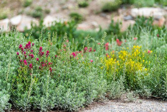 Couvrir le sol d'un tapis végétal