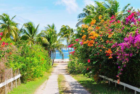 Vers les Tropiques