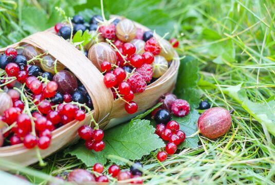 Sélection de petits fruits