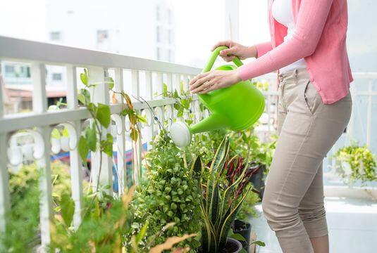 Assortiments pour balcon ou terrasse