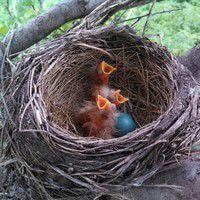 arbustes pour nourrir oiseaux