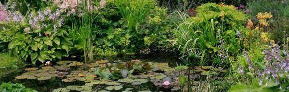 arbustes de bassin