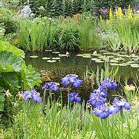 plantes pour bordure de bassin