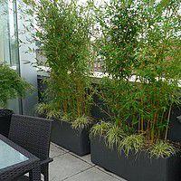 arbuste balcon pour se cacher