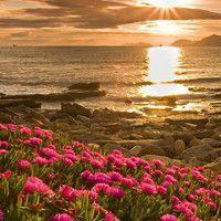delosperma jardin bord de mer