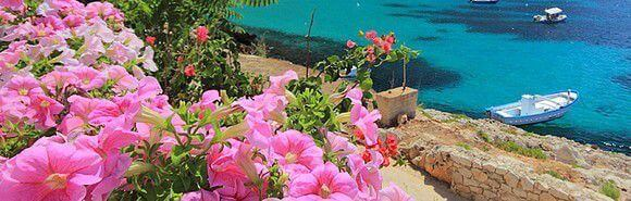 arbuste bord de mer au jardin