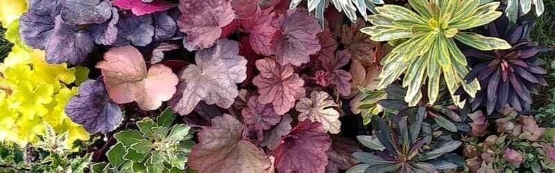 jardiniere automne hiver