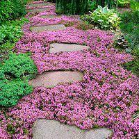 vivaces faciles jardin