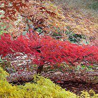 erable du japon jardin japonais facile