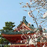fleurs de cerisier jardin zen