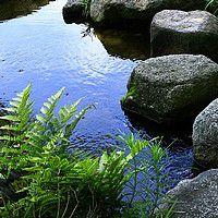 fougeres eau jardin japonais
