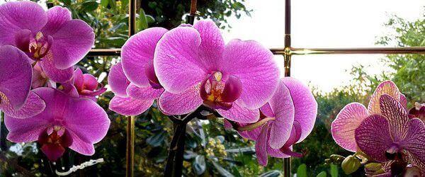 orchidées en lumière