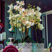 Orchidées dans une salle de bain