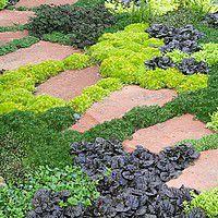 vivaces plantes tapissantes