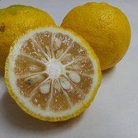 Planter un Yuzu chez vous et récolter le fameux citron japonais
