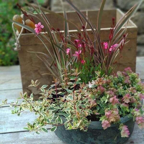 jardinière automne hiver