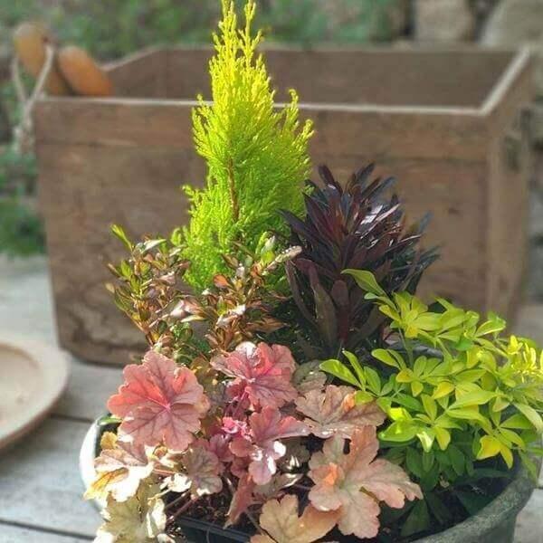 jardiniere automne hiver conifere