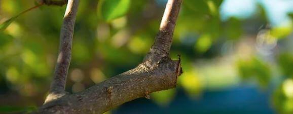 elagage arbuste arbre
