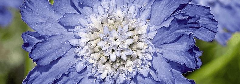 Plantes à floraison tardive