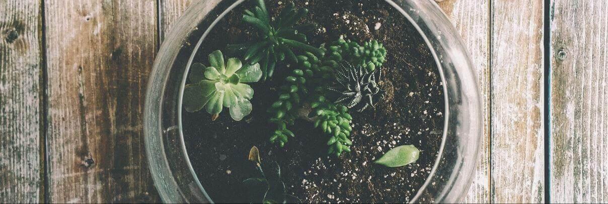 terrarium conseil plantation
